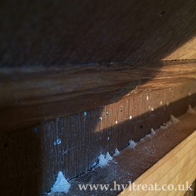 Woodworm treatment Clacton