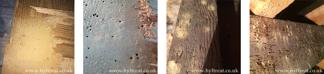 Woodworm Suffolk
